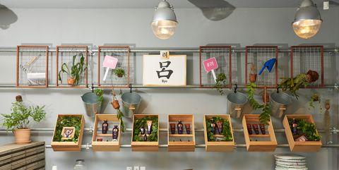 Shelf, Houseplant, Room, Building, Furniture, Interior design, Shelving, Collection, Plant,