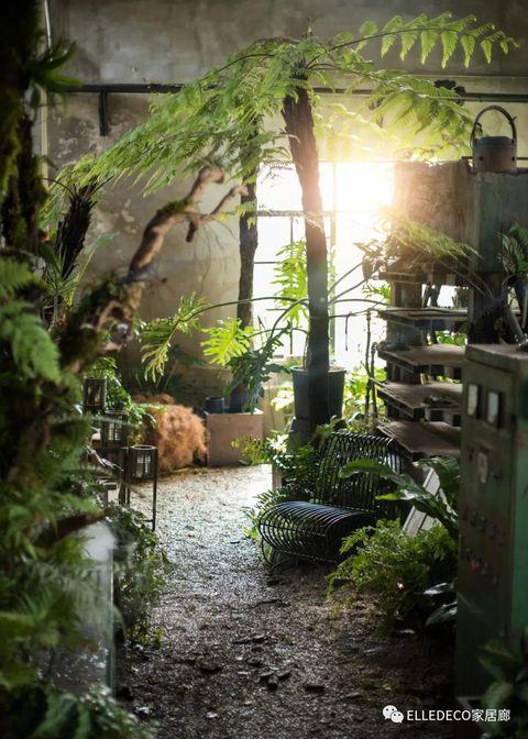 Nature, Vegetation, Light, Lighting, Botany, Sunlight, Tree, Plant, Garden, Non-vascular land plant,