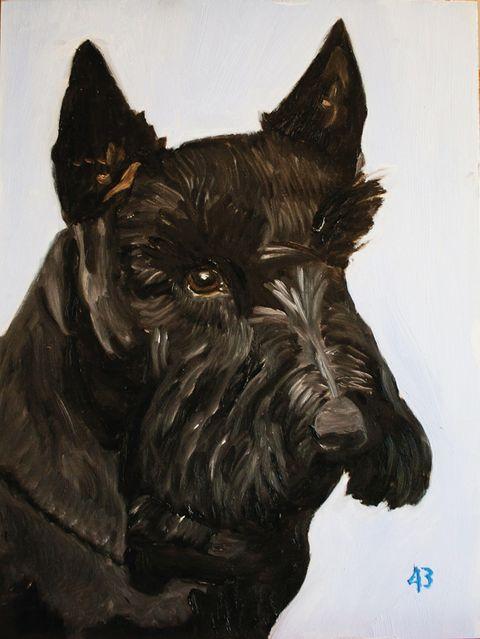 Scottish terrier, Vertebrate, Dog, Mammal, Canidae, Dog breed, Terrier, Giant schnauzer, Carnivore, Snout,