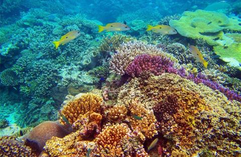 Reef, Coral reef, Coral, Underwater, Stony coral, Natural environment, Marine biology, Invertebrate, Organism, Coral reef fish,