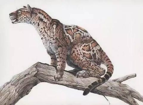 Terrestrial animal, Felidae, Animal figure, Claw, Big cats, Tail, Wildlife, Carnivore, Snow leopard, Art,