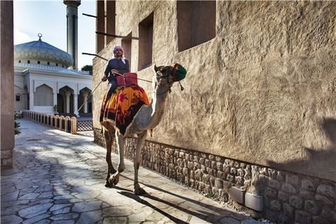 Camel, Camelid, Yellow, Arabian camel, Tourism, Tree, Street, Architecture, Building, Pack animal,