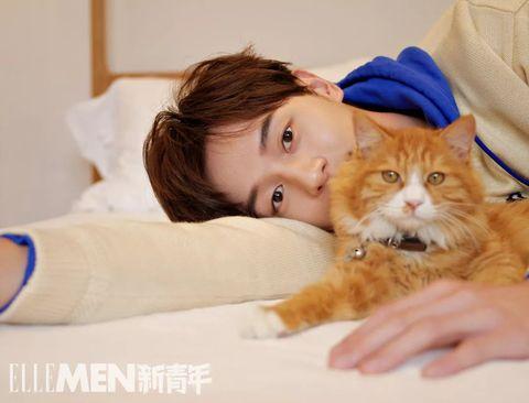 Cat, Felidae, Small to medium-sized cats, Skin, Nose, Whiskers, Carnivore, Eye, Fur, Kitten,