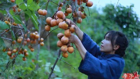 Fruit tree, Plant, Tree, Fruit, European plum, Apricot, Flower, Woody plant, Flowering plant, Baccaurea ramiflora,
